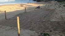 IMG 2322 thumbnail: Dune Stabilisation - North Cronulla Beach Project