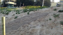IMG 2323 thumbnail: Dune Stabilisation - North Cronulla Beach Project