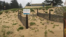 IMG 2601 thumbnail: Dune Stabilisation - North Cronulla Beach Project