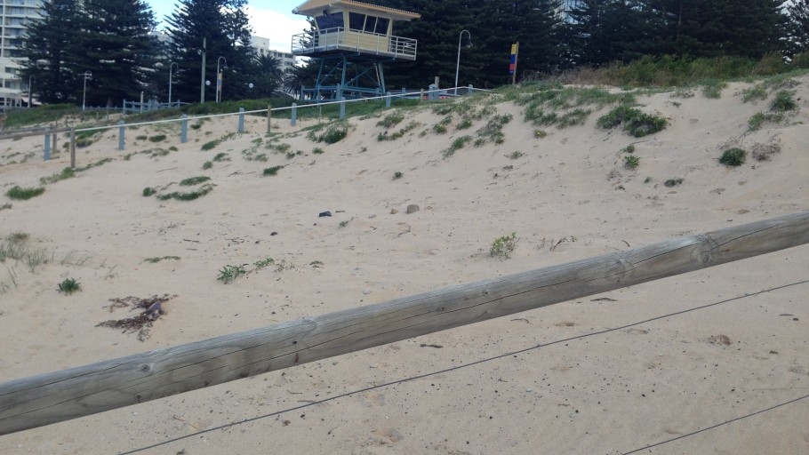 IMG 2213: Dune Stabilisation - North Cronulla Beach Project