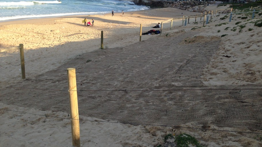 IMG 2322: Dune Stabilisation - North Cronulla Beach Project