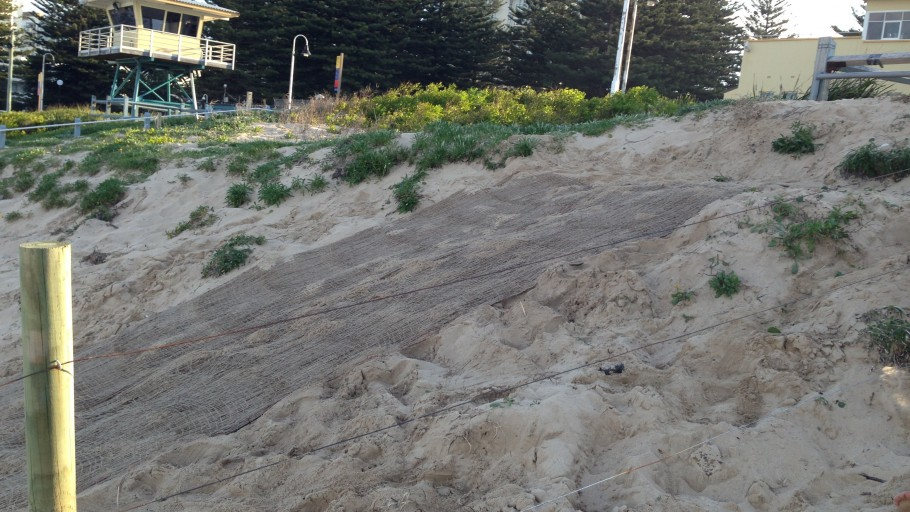 IMG 2323: Dune Stabilisation - North Cronulla Beach Project