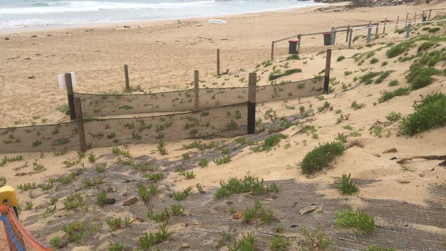 IMG 2605: Dune Stabilisation - North Cronulla Beach Project