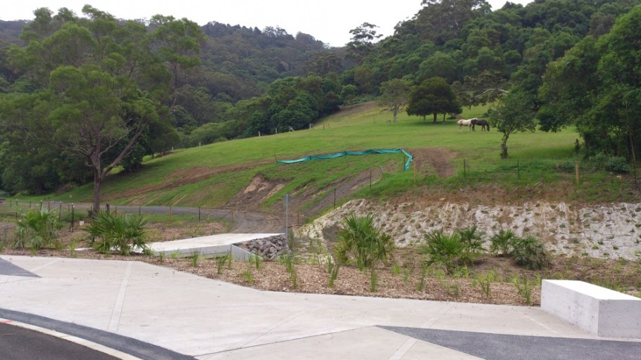 Plant Regeneration: Mt Kembla Mine Memorial Pathway (Stage 2) and American Creek Rehabilitation Works Project