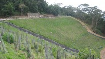 Remediation Works to Lower Embankment thumbnail: Kemira Colliery Project