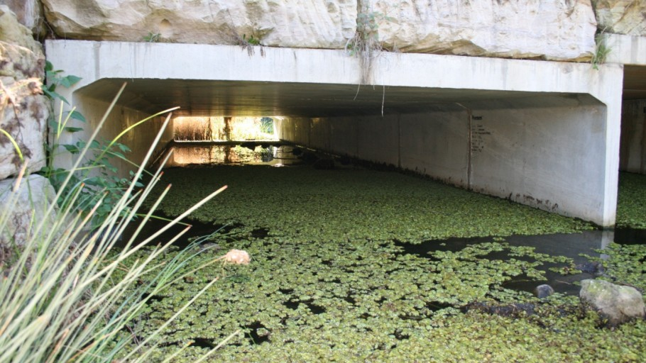 downstream occurences of salvinia: Salvinia Control Project