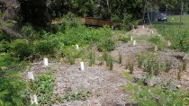 20161209 110603 thumbnail: Mollymoke Farm Creek - Revegetation and Weed Control Project