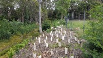 20161209 110710 thumbnail: Mollymoke Farm Creek - Revegetation and Weed Control Project