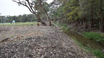 Photo point 1 thumbnail: Mollymoke Farm Creek - Revegetation and Weed Control Project