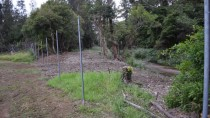 Photo point 2 thumbnail: Mollymoke Farm Creek - Revegetation and Weed Control Project