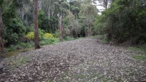Photo point 3 thumbnail: Mollymoke Farm Creek - Revegetation and Weed Control Project