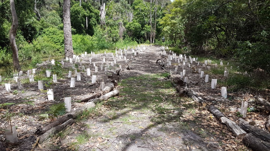 20161209 110333: Mollymoke Farm Creek - Revegetation and Weed Control Project