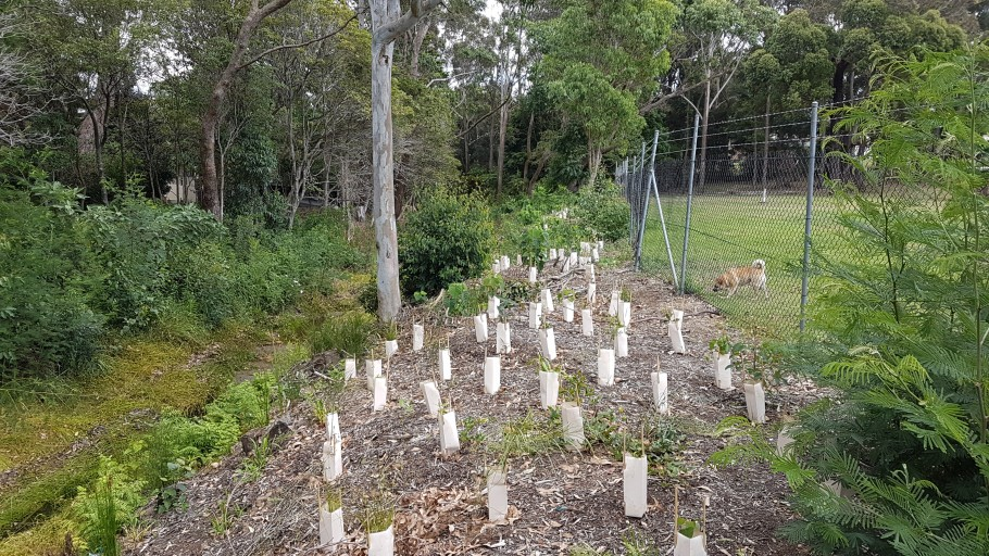 20161209 110710: Mollymoke Farm Creek - Revegetation and Weed Control Project