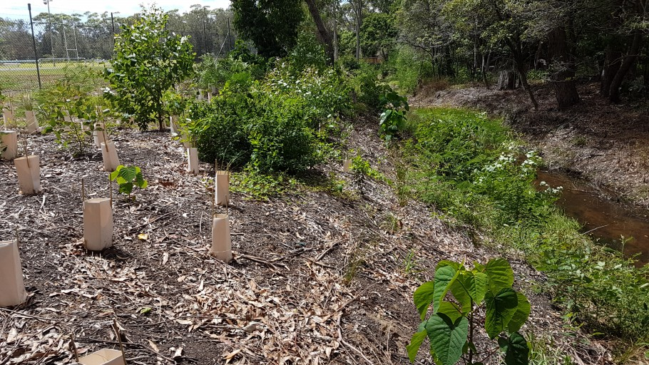 20161209 110906: Mollymoke Farm Creek - Revegetation and Weed Control Project