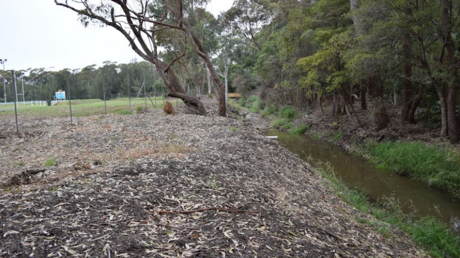 Photo point 1: Mollymoke Farm Creek - Revegetation and Weed Control Project